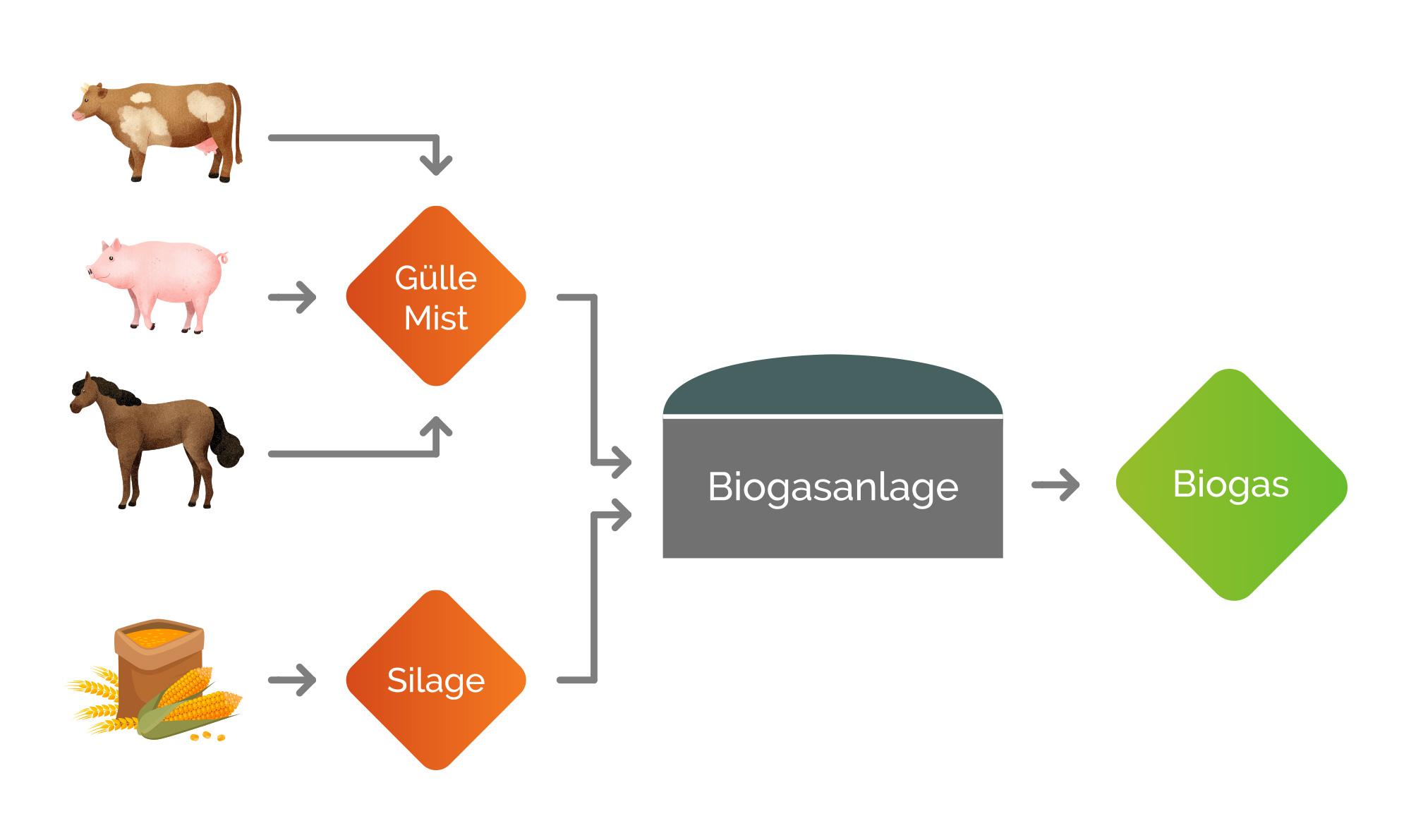 Energiegenossenschaft Gussenstadt eG – Grafik Biogasanlage